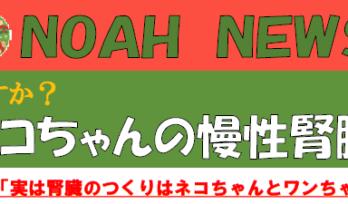 11月12月 獣医師 平子 休診のお知ら